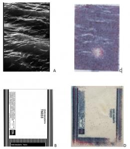 Figure: Images imprimées (A et B)  avec une encre chimique comparées à celles produites par l'utilisation de spores de Streptomyces  (C et D)